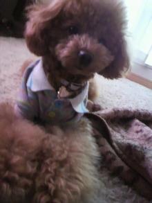 愛犬鈴ちゃんのライフスタイルブログ-2011022815370001.jpg