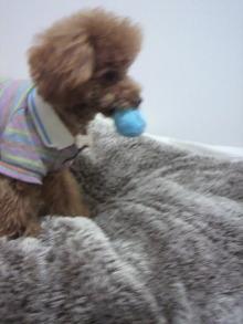 愛犬鈴ちゃんのライフスタイルブログ-2011030323070001.jpg