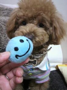 愛犬鈴ちゃんのライフスタイルブログ-2011030323070003.jpg