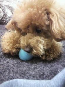 愛犬鈴ちゃんのライフスタイルブログ-2011030323080001.jpg