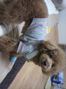 愛犬鈴ちゃんのライフスタイルブログ-2011030323060000.jpg