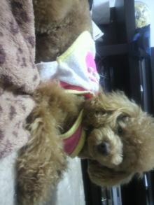 愛犬鈴ちゃんのライフスタイルブログ-2011030718040000.jpg