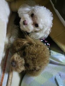 愛犬鈴ちゃんのライフスタイルブログ-2011031022360000.jpg