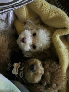 愛犬鈴ちゃんのライフスタイルブログ-2011031022340001.jpg