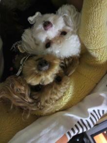 愛犬鈴ちゃんのライフスタイルブログ-2011031022340000.jpg