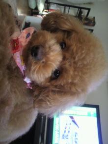 愛犬鈴ちゃんのライフスタイルブログ-2011031616550000.jpg