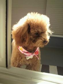 愛犬鈴ちゃんのライフスタイルブログ-2011031713320001.jpg