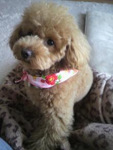 愛犬鈴ちゃんのライフスタイルブログ-2011031713350000.jpg