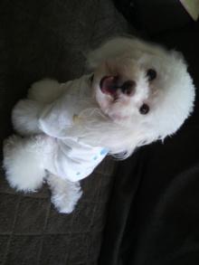 愛犬鈴ちゃんのライフスタイルブログ-2010072307540001.jpg
