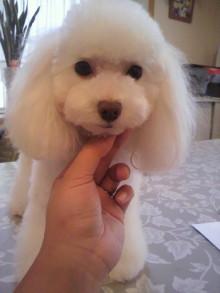 愛犬鈴ちゃんのライフスタイルブログ-2010092716370000.jpg