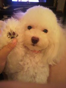 愛犬鈴ちゃんのライフスタイルブログ-2010101420580000.jpg