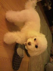 愛犬鈴ちゃんのライフスタイルブログ-2011032618360001.jpg
