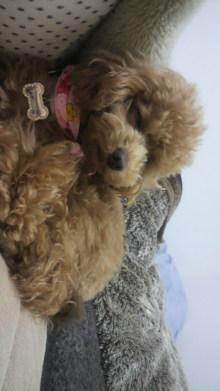 愛犬鈴ちゃんのライフスタイルブログ-2011032623330000.jpg