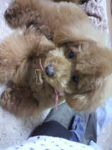 愛犬鈴ちゃんのライフスタイルブログ-2011032920350000.jpg