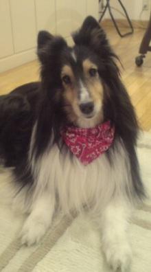 愛犬鈴ちゃんのライフスタイルブログ-20070331212015.jpg