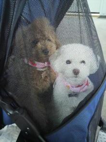 愛犬鈴ちゃんのライフスタイルブログ-2011033110510000.jpg