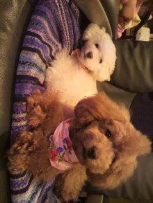 愛犬鈴ちゃんのライフスタイルブログ-2011040121140000.jpg