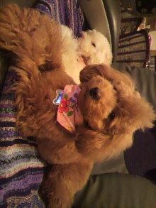愛犬鈴ちゃんのライフスタイルブログ-2011040121150002.jpg