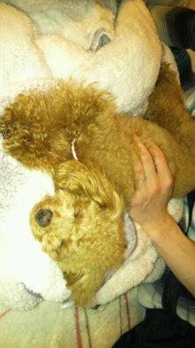 愛犬鈴ちゃんのライフスタイルブログ-2011040222560001.jpg