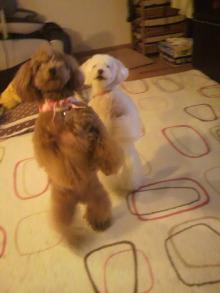 愛犬鈴ちゃんのライフスタイルブログ-2011040322180001.jpg