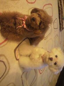 愛犬鈴ちゃんのライフスタイルブログ-2011040322190000.jpg