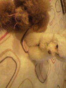 愛犬鈴ちゃんのライフスタイルブログ-2011040322190001.jpg