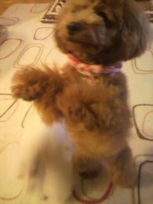 愛犬鈴ちゃんのライフスタイルブログ-2011040322190002.jpg