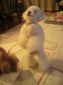 愛犬鈴ちゃんのライフスタイルブログ-2011040322200002.jpg
