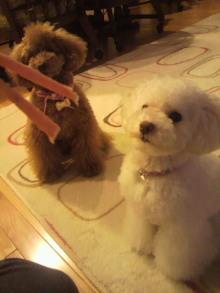 愛犬鈴ちゃんのライフスタイルブログ-2011040322200003.jpg