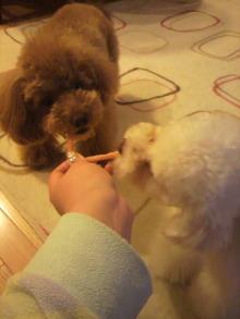 愛犬鈴ちゃんのライフスタイルブログ-2011040322200004.jpg