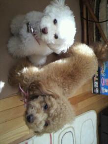 愛犬鈴ちゃんのライフスタイルブログ-2011040411560001.jpg