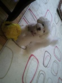 愛犬鈴ちゃんのライフスタイルブログ-2011040411530000.jpg