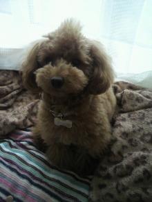 愛犬鈴ちゃんのライフスタイルブログ-2011040813570000.jpg
