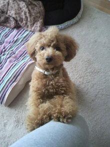 愛犬鈴ちゃんのライフスタイルブログ-2011040813570001.jpg