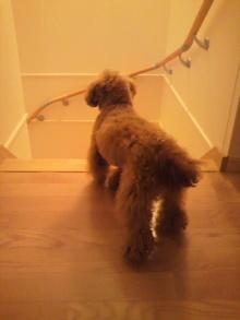 愛犬鈴ちゃんのライフスタイルブログ-2011040822080000.jpg