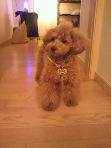 愛犬鈴ちゃんのライフスタイルブログ-2011040822090000.jpg