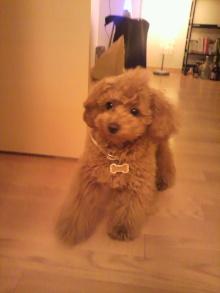愛犬鈴ちゃんのライフスタイルブログ-2011040822090001.jpg