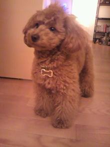 愛犬鈴ちゃんのライフスタイルブログ-2011040822090002.jpg