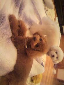 愛犬鈴ちゃんのライフスタイルブログ-2011041121430000.jpg
