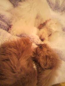 愛犬鈴ちゃんのライフスタイルブログ-2011041121400001.jpg