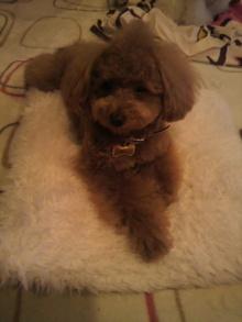 愛犬鈴ちゃんのライフスタイルブログ-2011041023320001.jpg