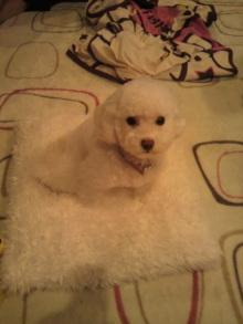 愛犬鈴ちゃんのライフスタイルブログ-2011041023330000.jpg