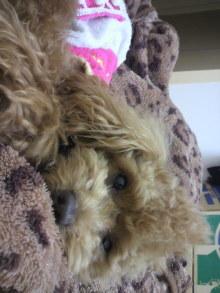 愛犬鈴ちゃんのライフスタイルブログ-2011041401050000.jpg