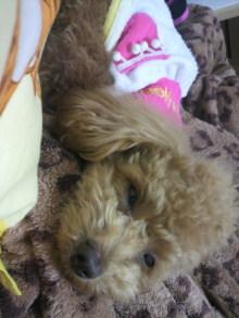 愛犬鈴ちゃんのライフスタイルブログ-2011041401040001.jpg