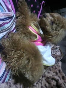 愛犬鈴ちゃんのライフスタイルブログ-2011041519330000.jpg