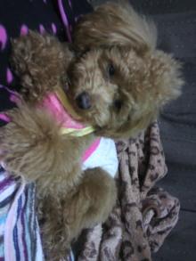 愛犬鈴ちゃんのライフスタイルブログ-2011041519200002.jpg