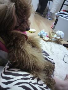 愛犬鈴ちゃんのライフスタイルブログ-2011041523240002.jpg