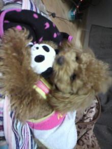 愛犬鈴ちゃんのライフスタイルブログ-2011041600080000.jpg