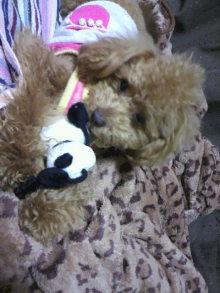 愛犬鈴ちゃんのライフスタイルブログ-2011041600080002.jpg