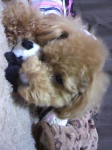 愛犬鈴ちゃんのライフスタイルブログ-2011041600090000.jpg